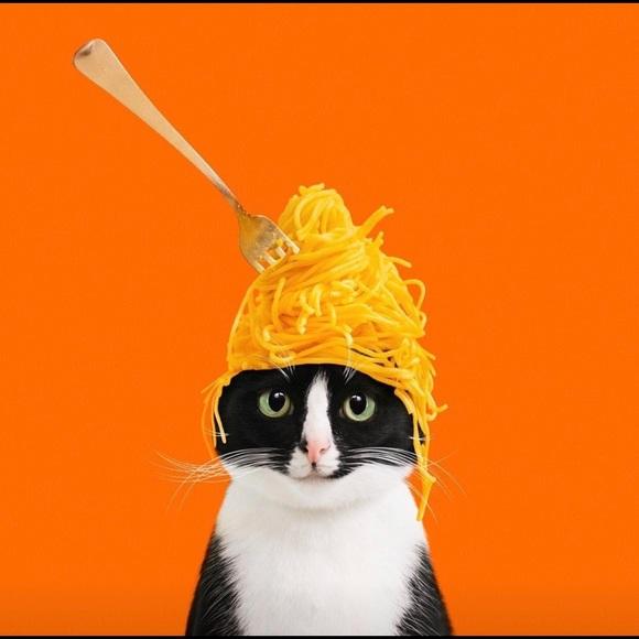 meowcat5